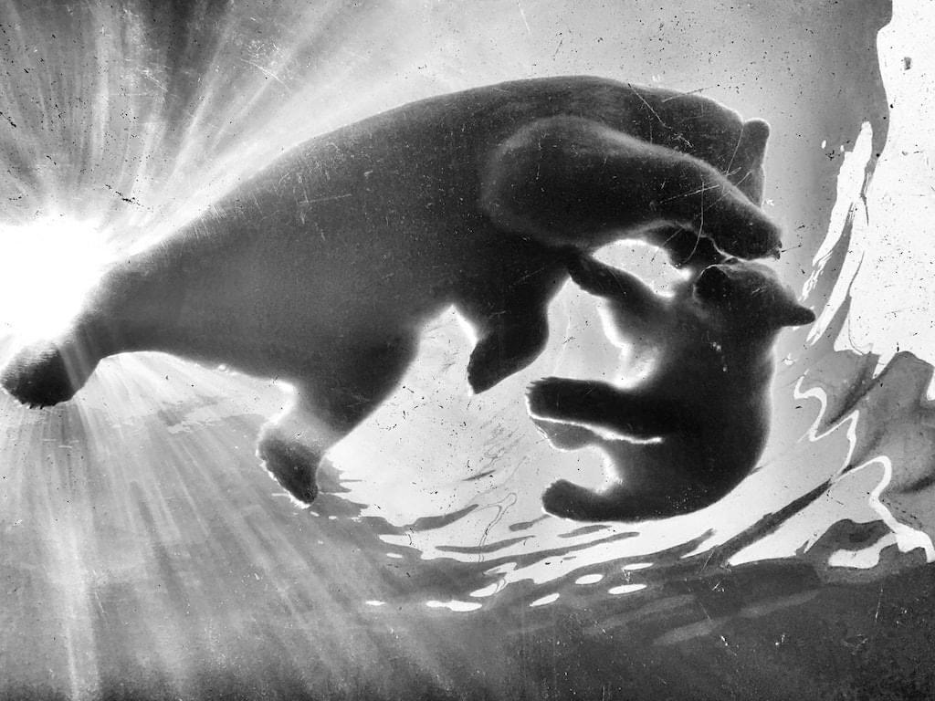 Biodiversität - Artenvielfalt am Beispiel von Eisbären