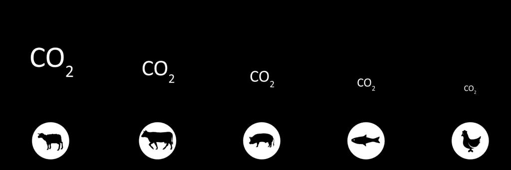 Das Essen und der CO2 Fussabdruck