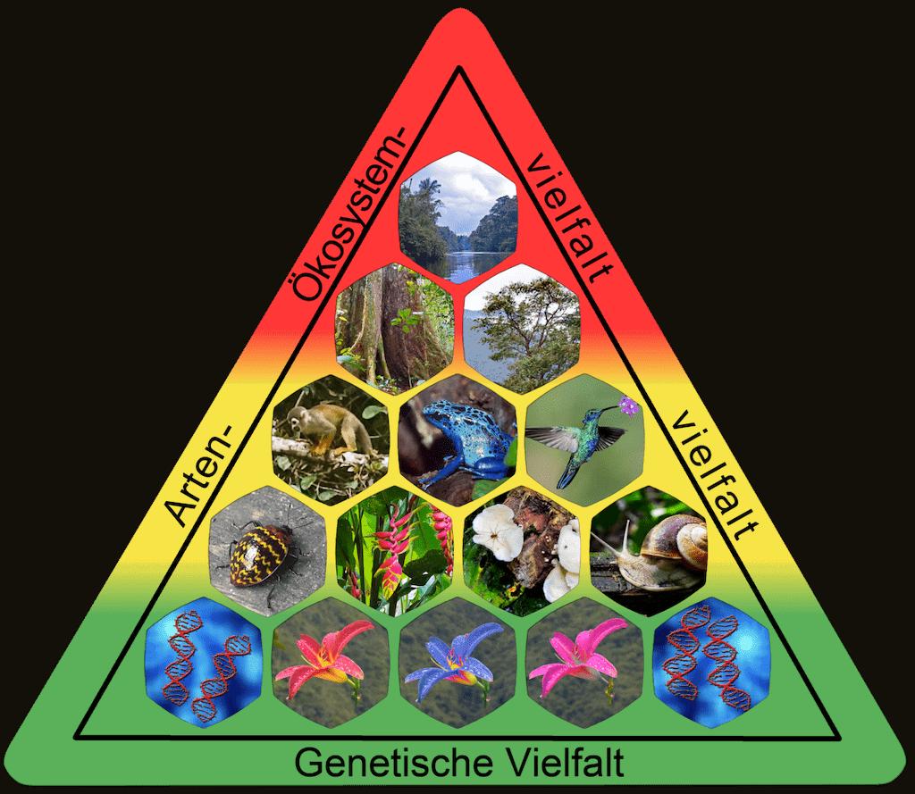 Elemente der Biodiversität