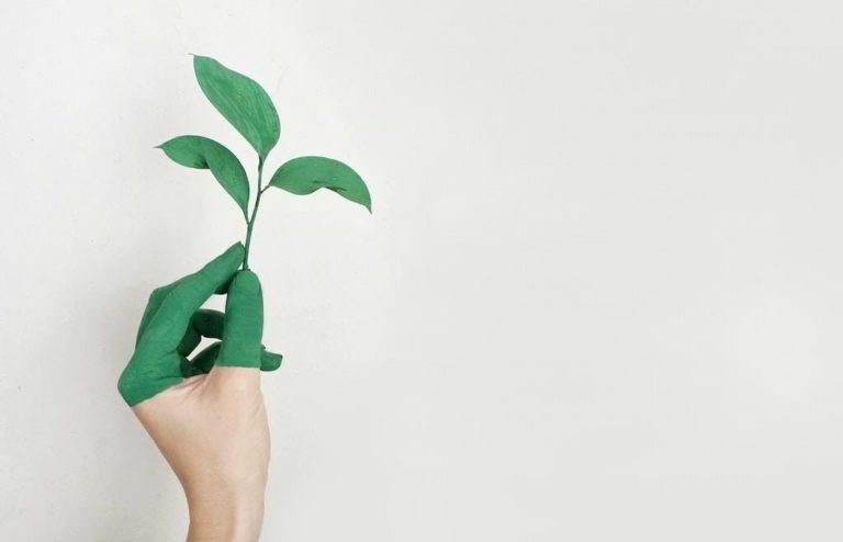 Nachhaltigkeit und Natur