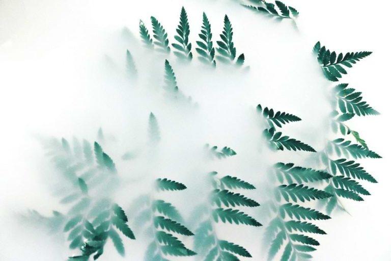 Ökologie Abbildung