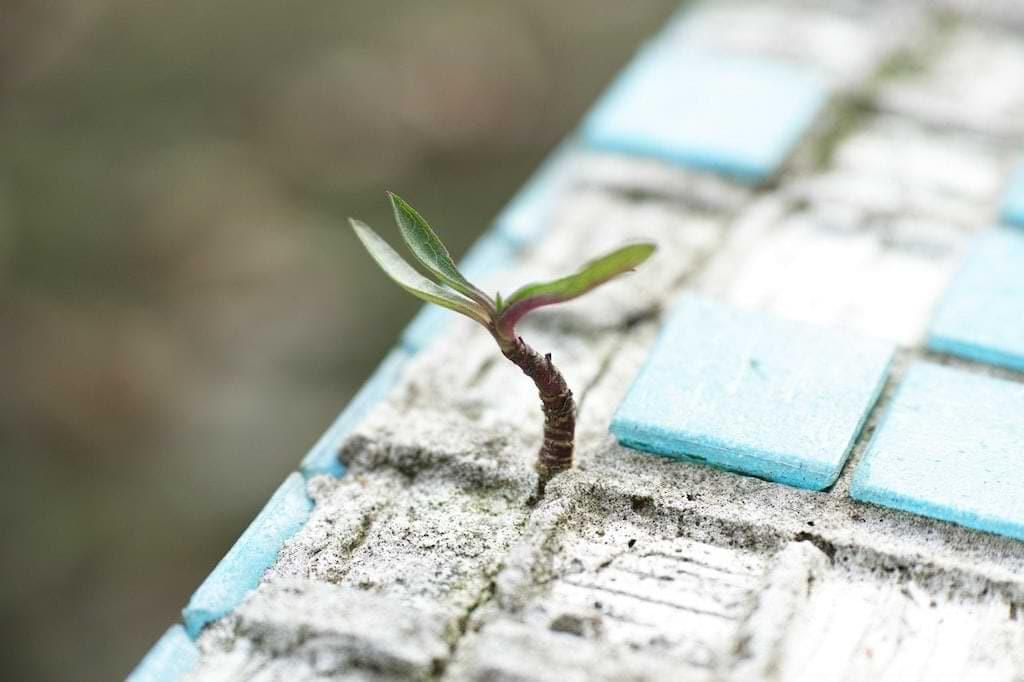 Umweltschutz - Umweltschäden möglichst reduzieren